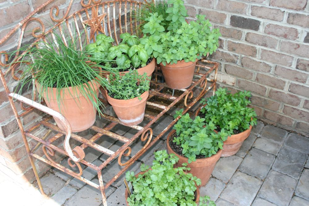 Container herb garden diy projects fresh herb recipes for Container herb garden